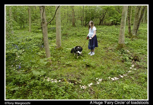 Giant 'Fairy Circle' of toadstools.jpg
