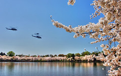 Flying over the Cherry Blossoms (` Toshio ') Tags: flowers trees usa lake colors america mall cherry washingtondc flying dc washington branch blossoms cherryblossoms helicopters hdr tidalbasin toshio colorphotoaward superaplus