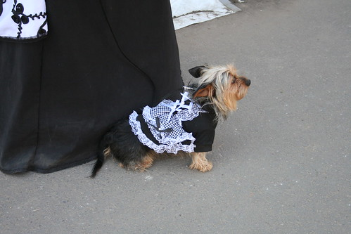 Lolita Doggie