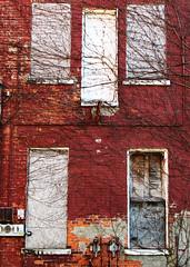 closed (jamelah) Tags: windows red brick wall vines closed ivy etc boardedup floatingdoor