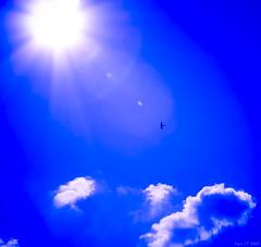 Fly me to the ... sun (Paco CT) Tags: blue sky sun bird sol azul fun saturated extreme olympus explore ave cielo pajaro 2007 extrema e500 blueribbonwinner saturada supershot superbmasterpiece pacoct