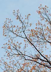 春日傍晚 Evening at the Arboretum (Mingfong) Tags: spring story madison albumcover stories 桌布 arobretum mingfong musicflyer mingfongjan artbrochure sketchoflight mingfongphotography
