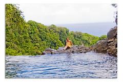 0407_AKC6062.jpg (Mark Yezbick) Tags: ocean hawaii amazing maui incredible breathtaking infinitypool pipiwaitrail haleakalanationalpark makahikufalls