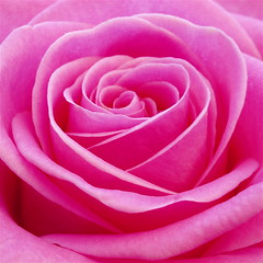 I wish...... (cattycamehome) Tags: pink flowers roses summer flower colour macro rain rose tag3 taggedout petals bravo soft tag2 all tag1 heart blossom sweet quote © dream petal rights layers reserved fushia excellence catherineingram georgeeliot brigh gtaggroup goddaym1 may2007 abigfave cattycamehome allrightsreserved©