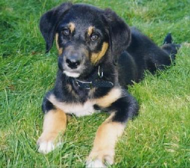 Sam puppy!