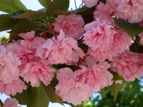 Spring Fling Carroll Gardens