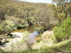 Swampy plains river upper (hollis_corey) Tags: mountains water river fishing snowy nsw flyfishing trout snowymountains troutfishing khancoban swampyplainsriver