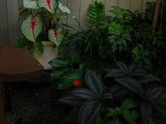 HDR Garden -1