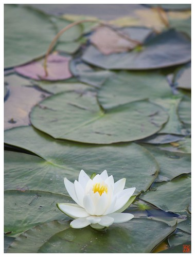 Water Lily 070519 #03