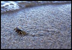 L'onda che incombe... (Viandantediponente) Tags: sardegna kodak acqua sabbia onda marea granchio naturalmente z740 battigia
