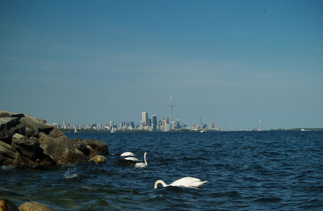 Etobicoke - Toronto 508992681_f797741b8a_o