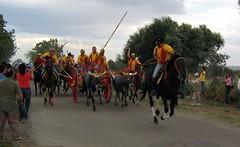 Carrese Portocannone: giovanotti (m1979) Tags: cavalli carri molise buoi portocannone carrese giovanotti corsadeicarri