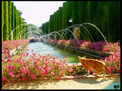 El gatito y la fuente   (aunqtunolosepas) Tags: viaje pink flowers espaa orange pet cats pets flores flower cute water fountain beautiful beauty animal animals cat vacances spain agua bea flor fuente rosa gatos 2006 andalucia cutie gato cordoba alcazar felinos felino animales lovely cuteness naranja vacaciones mascota mascotas gatito abw bestofcats bestofcat aunqtunolosepas superbmasterpiece flickrdiamond pet500