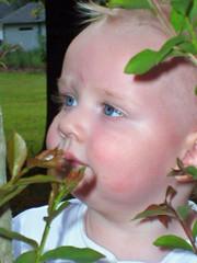 gideonplant