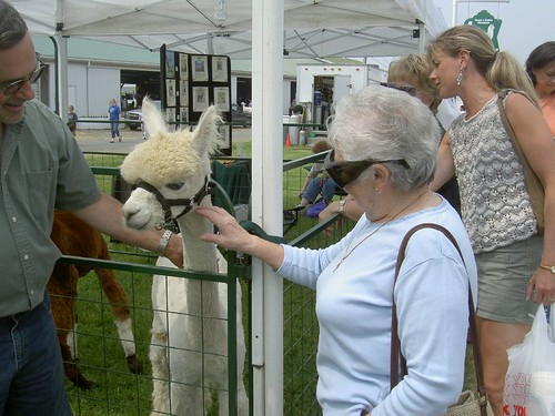 Grandma and an Alpaca