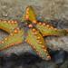 star_yellow&orange