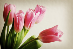 My Tulip Obsession (cindyloughridge) Tags: tulips happyeastereveryone iknowihavegottogivethetulipphotosarest