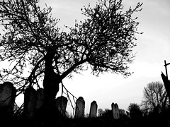 Tree and Graves (Mockney Rebel) Tags: blackandwhite bw grave graveyard photoshop fuji finepix fujis9600 againstflickrcensorship