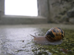 A Snail at Kilmacdaugh (IrishFireside) Tags: county ireland galway burren irsh kilmacdaugh