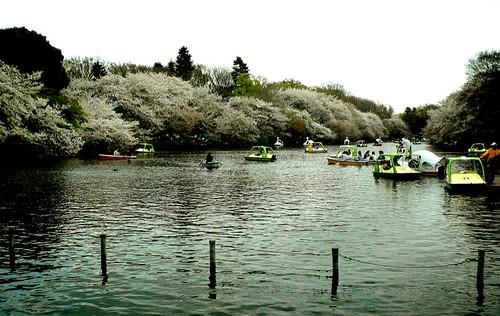 Inokashira Park Boats