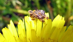 Insects Coppulating (Gema VonSeka) Tags: nature finland floraandfauna fallkulla