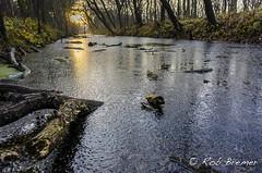 Noordhollands Duinreservaat (rob.bremer) Tags: noordhollandsduinreservaat kennemerduinen bakkum landscape landschap winter bomen tree