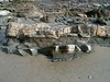 HPIM3987.JPG (ArgyleMJH) Tags: boumacycle california cycle faults geology heislerpark lagunabeach mainbeach miocene mudstone orangecounty sandstone sedimentary shale submarinefan topangaformation turbidite turbiditycurrent