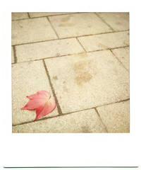 Handprint On Cold Stone () Tags: red urban slr film leaves stone polaroid sx70 leaf patterns ground negativespace analogue instantphotography tlt instantfilm 779 779film