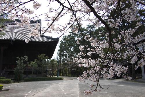 Chionji temple (知恩寺)