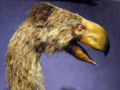 not dodo, but prehistoric nevertheless