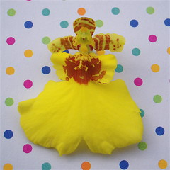 Catty's clown (cattycamehome) Tags: pink flowers blue orange orchid flower colour macro green yellow tag3 taggedout happy bravo funny tag2 all tag1 orchids bright quote clown  smiles polkadots spotty rights laugh cheerful dots clowns reserved dotty tokillamockingbird excellence catherineingram harperlee gtaggroup goddaym1 so may2007 abigfave cattycamehome allrightsreserved youmakemesooohappy