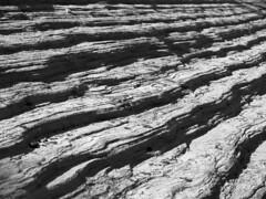 Monochromatic aberrations (fields of bohemia) Tags: bw texture utah sandstone zionnationalpark navajo weathering crossbeds eolian