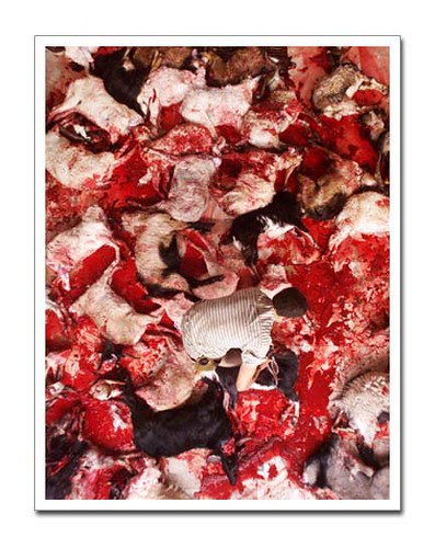 Slaughtered Sheep (Do not click here if you are squeamish!)