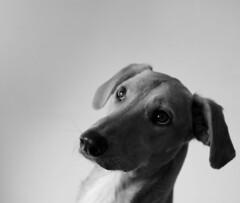 Bailey - by sheyne