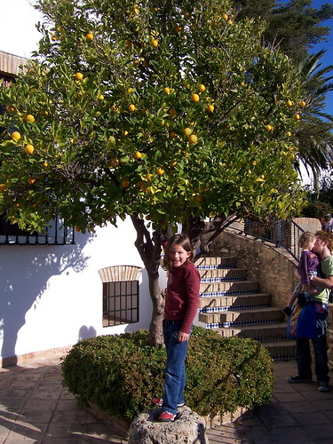 Ariana and Orange Tree