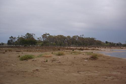 Els Eucaliptus
