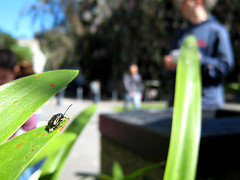 it's all about the small things | beetle
