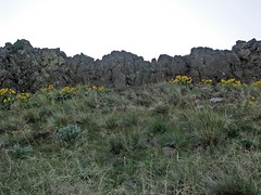 Balsam Root and Basalt above Tarpiscan Rd.