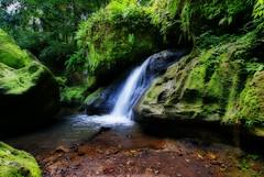 Bali Dream (DanielKHC) Tags: bali green water indonesia waterfall interestingness bravo sony explore alpha orton a100 goagajah interestingness3 50faves nohdr tamron1118mm aplusphoto danielcheong 200750plusfaves goldenphotographer diamondclassphotographer flickrdiamond danielkhc explore25may07