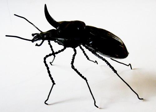 Big Horn Beetle