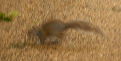 Dynamism of a Squirrel on Gravel