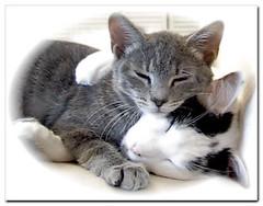 Ticocats