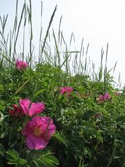IMG_4284 (AbbyB.) Tags: beach newjersey jerseyshore oceangrove