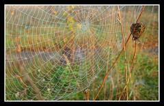 web spider reloaded (pgpdesign (paul)) Tags: macro gabriel topf25 ilovenature paul spider interestingness dof background web popular naturesfinest explored pasztor p1f1 ci33 anawesomeshot impressedbeauty superbmasterpiece onlythebestare pgpdesign paulgabrielpasztor