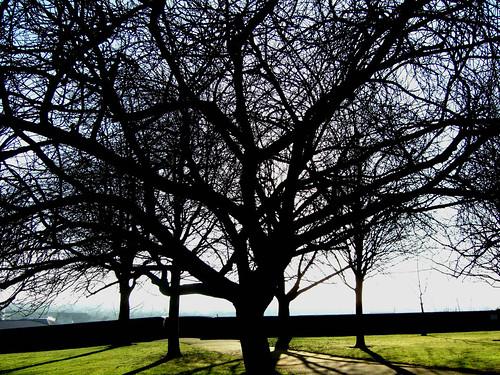 trees, Nottingham Castle