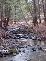 Owl Hollow Creek