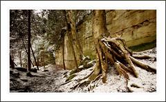 Hardy Tree - by Bret Frk