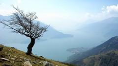 Lake in the Italian Alps (cortomaltese) Tags: italy lake como alps tree fog clouds topv1111 alpi lombardia slopes lagodicomo lombardy domaso prealpi branchingtree dongo piona foggysky treesubject montemezzo