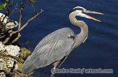 Everglades 05©