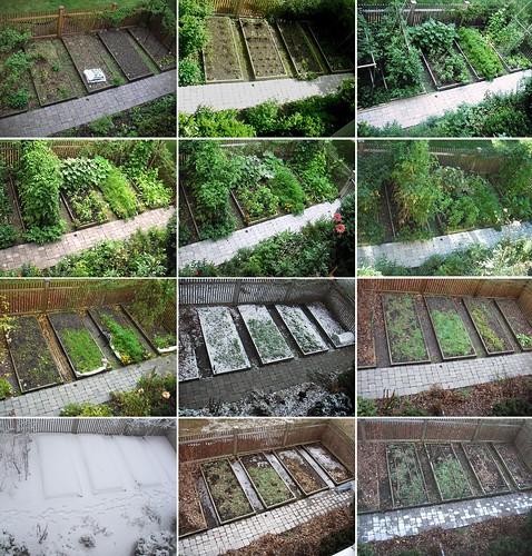 garden 12 views